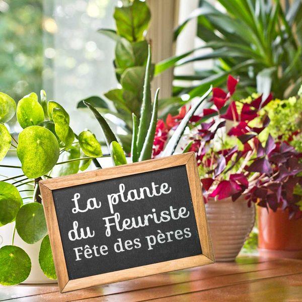 Plantes et Arbustes PLANTE DU FLEURISTE FETE DES PERES