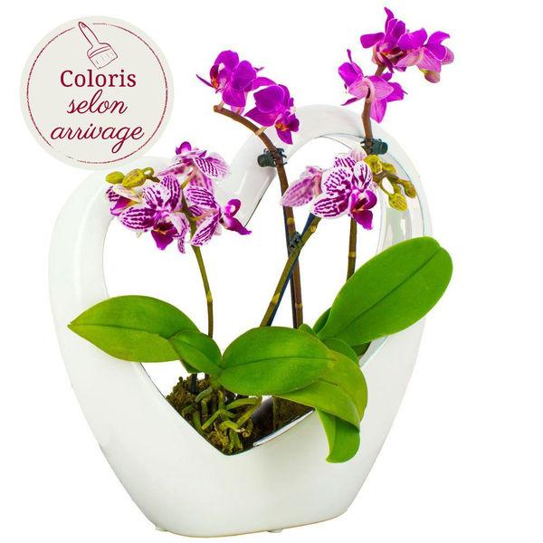 Orchidée COEUR BLANC + 2 MINI-ORCHIDEES
