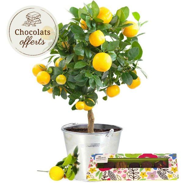 Cadeaux Gourmands CITRONNIER + ETUI 5 CHOCOLATS