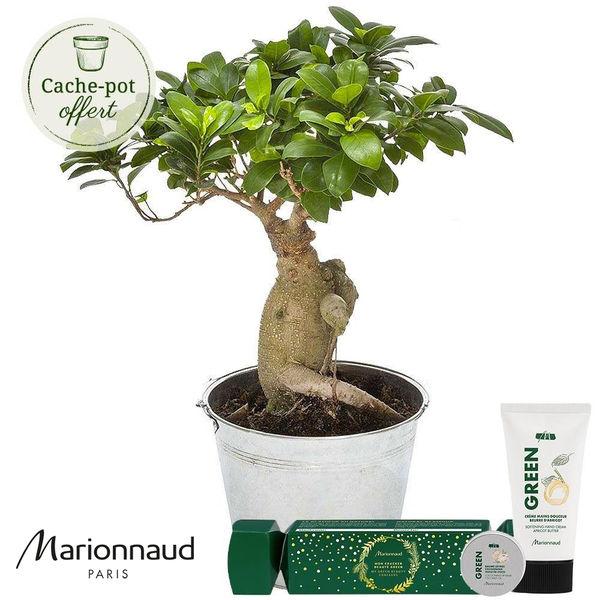 Cadeaux Bien-Etre BONSAI GINSENG + GREEN CRACKER MARIONNAUD