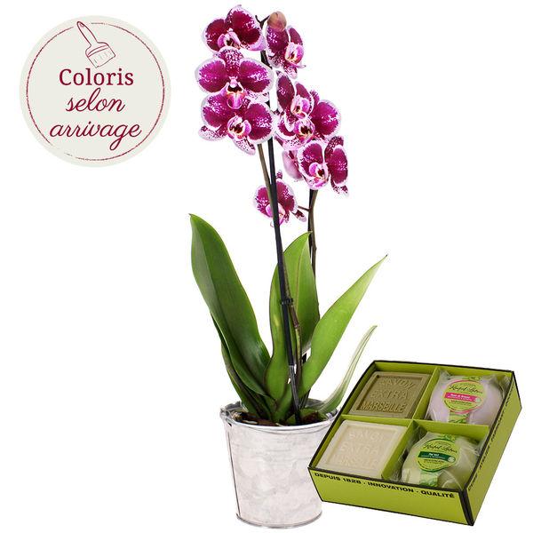 Cadeaux Bien-Etre ORCHIDEE 2 BRANCHES + COFFRET DECOUVERTE