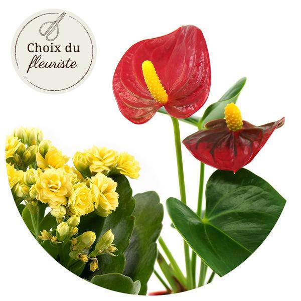Plantes et Arbustes PLANTE FLEURIE AU CHOIX DU FLEURISTE