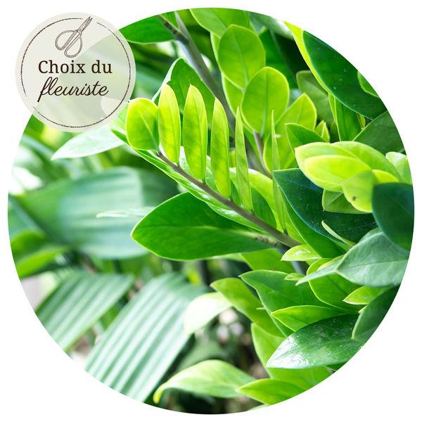 Plantes et Arbustes PLANTE VERTE AU CHOIX DU FLEURISTE