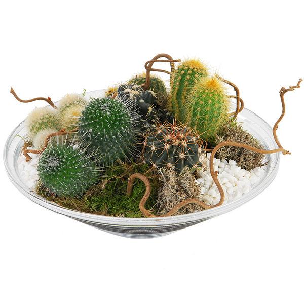 Plantes et Arbustes COUPE DE CACTUS