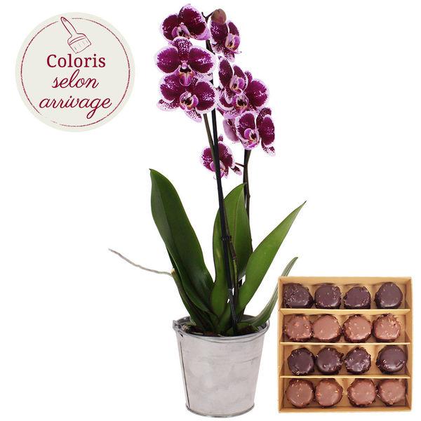 Cadeaux Gourmands 1 ORCHIDEE 2 BRANCHES + ROCHERS AU PRALINE