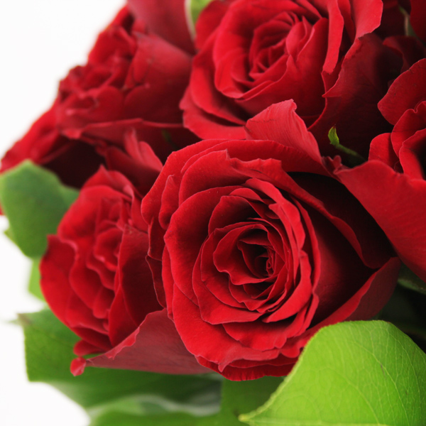 15 ROSES ROUGES - 2