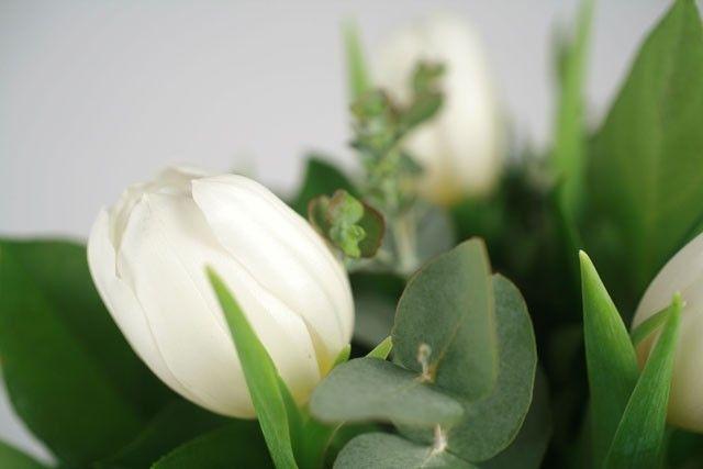 Bouquet de tulipes blanches livraison express florajet for Livraison tulipes