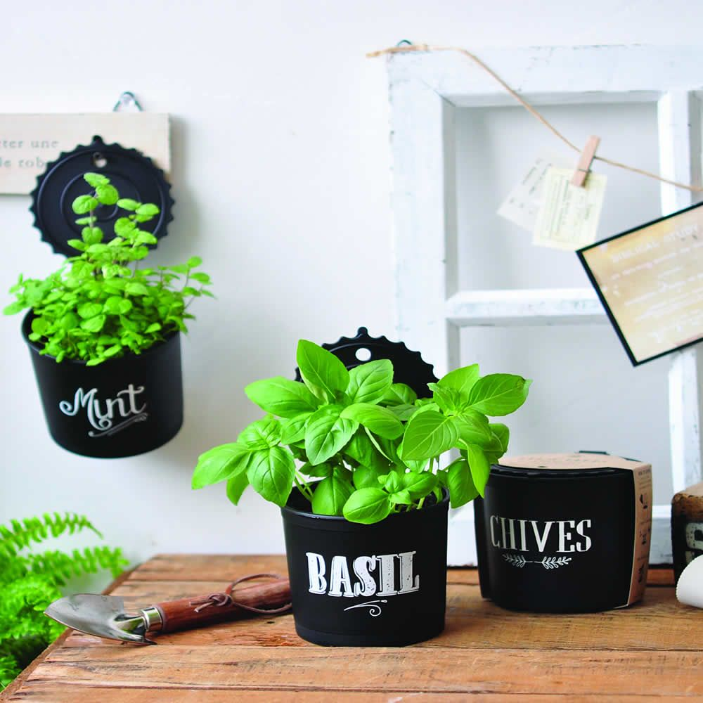 Plantes et Arbustes BASILIC, MENTHE ET CIBOULETTE