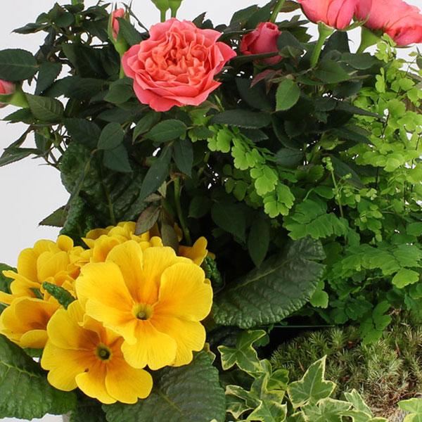 Plantes Deuil COMPOSITION SOUVENIRS