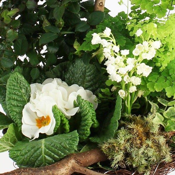Plantes Deuil COMPOSITION COMPASSION