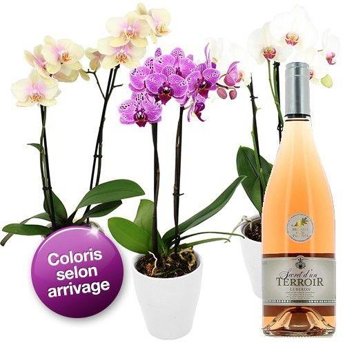 Plante verte & fleurie 1 ORCHIDEE 2 BRANCHES + VIN ROSé