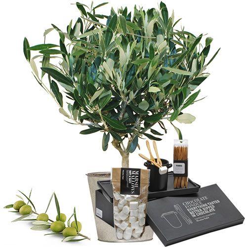 plante verte fleurie olivier fondue choco livraison express florajet. Black Bedroom Furniture Sets. Home Design Ideas