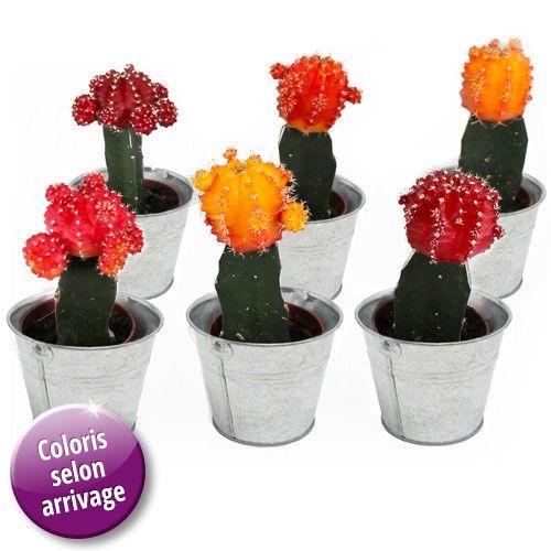 plantes et arbustes 6 mini cactus couleurs livraison express florajet. Black Bedroom Furniture Sets. Home Design Ideas