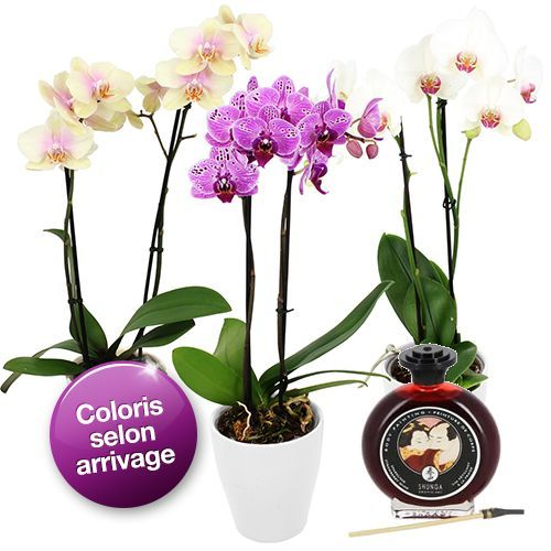 Cadeaux Sexy ORCHIDEE 2BRANCHES+PEINTURE CORPS