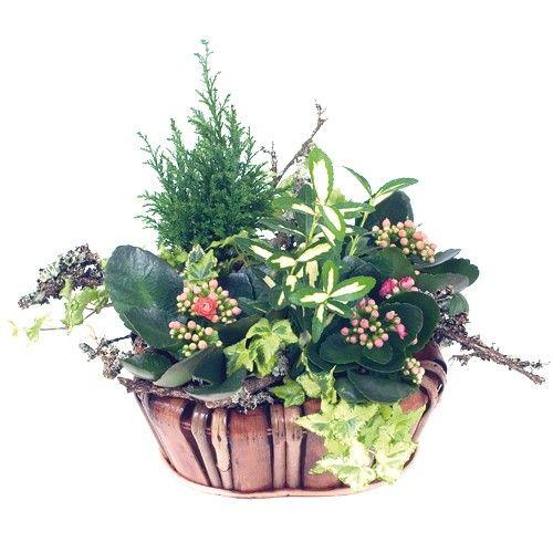 Plantes et Arbustes CORBEILLE NATURE