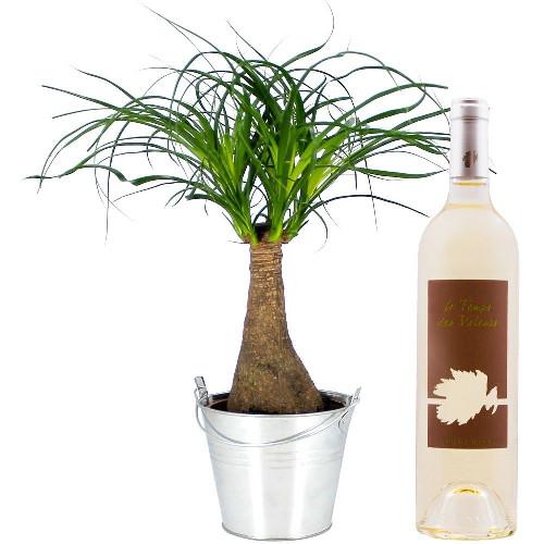 Cadeaux Gourmands BONSAI NOLINA + VIN BLANC