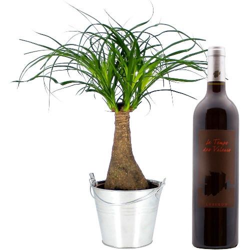 Cadeaux Gourmands BONSAI NOLINA + VIN ROUGE