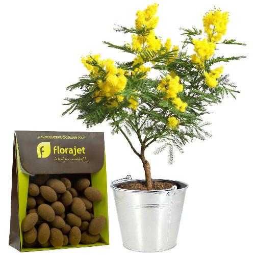 Plantes et arbustes mimosa en pot amandes livraison for Plantes et arbustes
