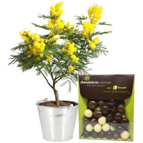Plantes et arbustes mimosa en pot melange livraison for Plantes et arbustes