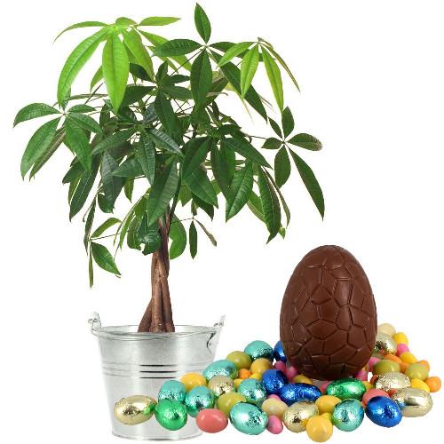 Plantes et arbustes pachira oeufs livraison express for Plantes et arbustes