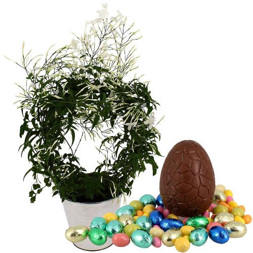 Plantes et arbustes jasmin blanc oeufs livraison for Plantes et arbustes