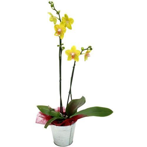 Orchidée ORCHIDEE JAUNE 2 BRANCHES