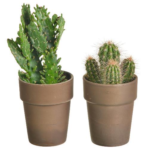 Plantes et Arbustes LOT DE 2 CACTUS + POT