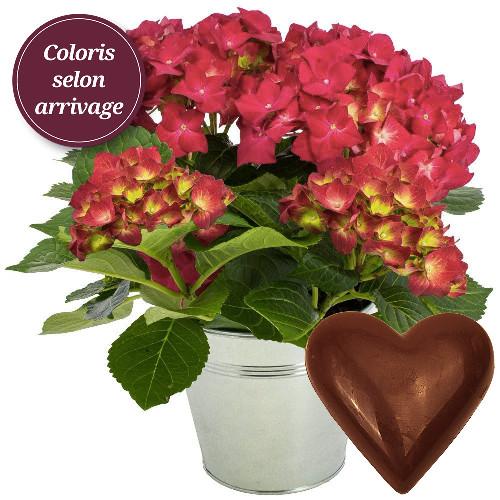 plantes et arbustes hortensia coeur en chocolat livraison express florajet. Black Bedroom Furniture Sets. Home Design Ideas