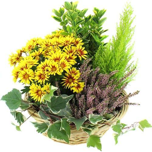 Plantes Deuil ESPOIR