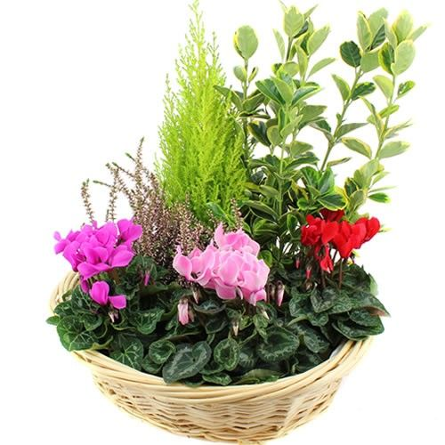 Plantes Deuil CELESTE