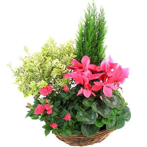 Plantes Deuil SENTIMENT