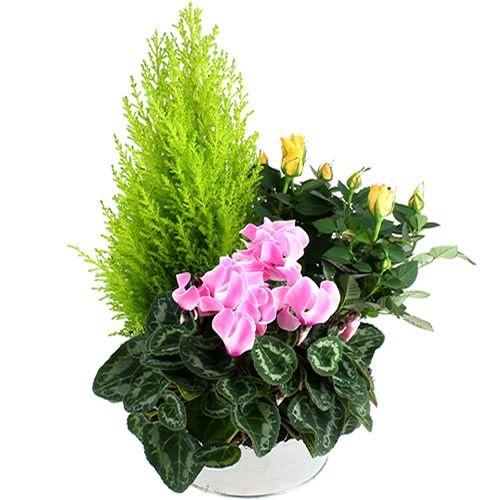 Plantes Deuil ANGE