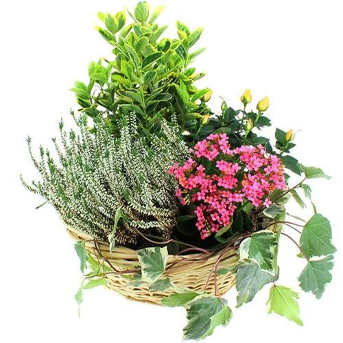 Plantes Deuil COMPOSITION SOLENNELLE