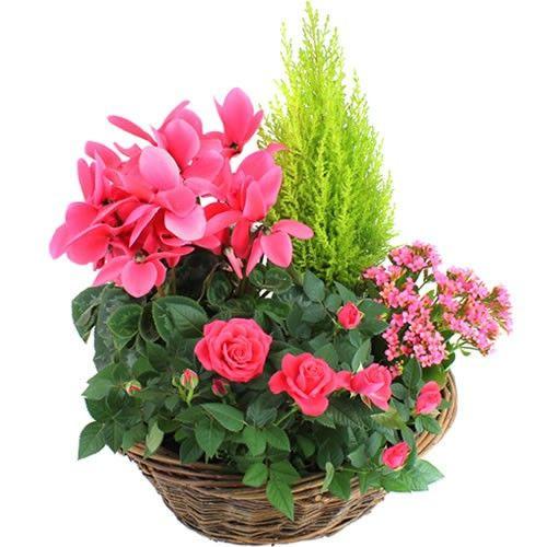 Plantes Deuil SYMPHONIE