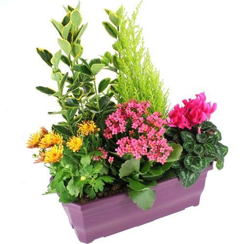 Plantes Deuil AMOUR ETERNEL