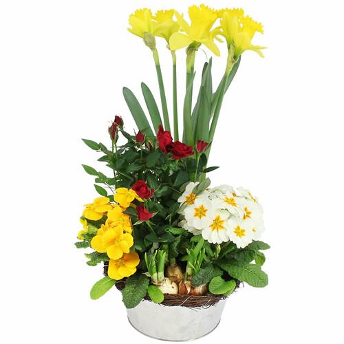 plante fleurie jardin ensoleille livraison express