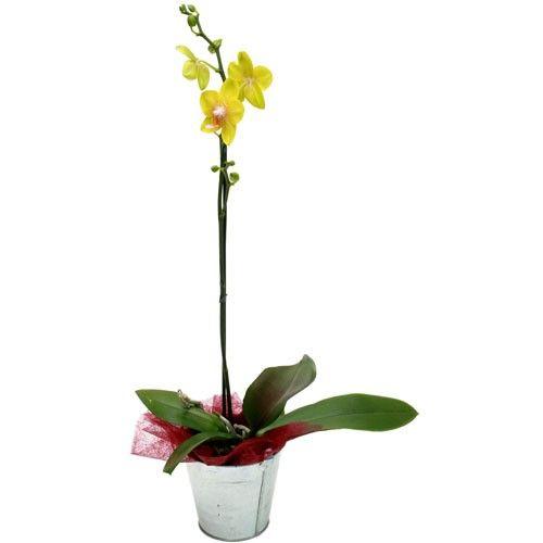 Orchidée ORCHIDEE JAUNE 1 BRANCHE