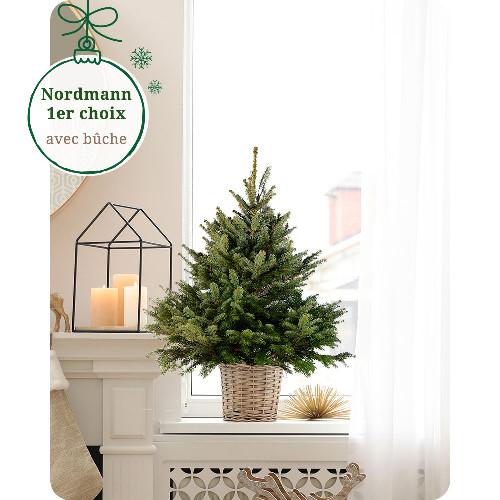Sapin Nordmann SAPIN NORDMANN 60/80CM